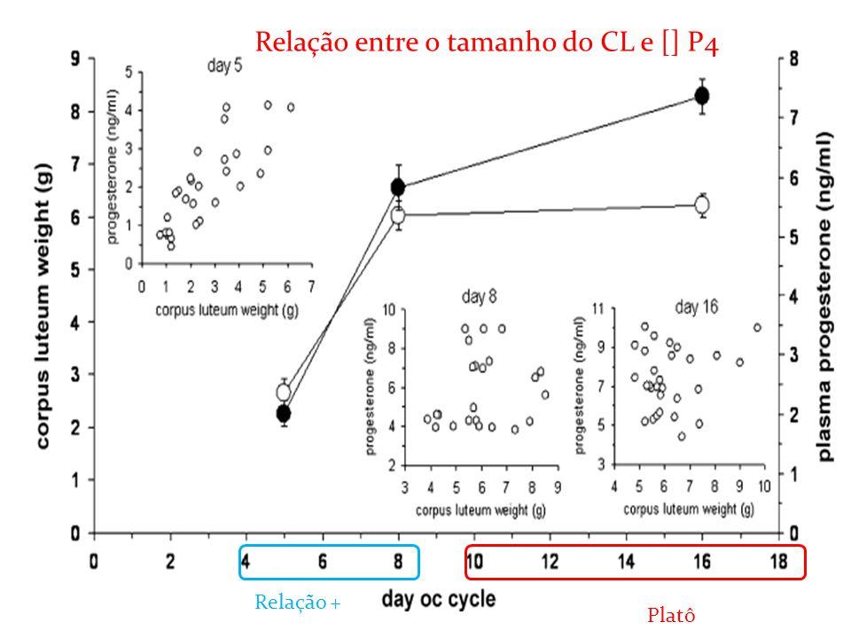 Relação entre o tamanho do CL e [] P4